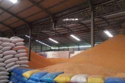 GPMT: Stok Jagung di Industri Pakan Ternak Terus Menipis