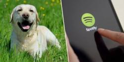 Spotify Susun Lagu Khusus untuk Anjing yang Ditinggal Tuannya di Rumah