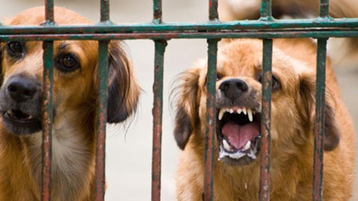 Sudah 749 Orang Digigit Anjing di Sumbawa NTB