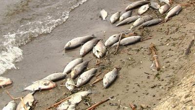 Bupati Tobasa Temui Kapoldasu Terkait Pembuangan Bangkai Ikan ke Perairan Danau Toba