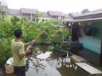 Terendam 3 Bulan, Rumah Benny Limbong di Rantau Selatan Jadi Tempat Mancing