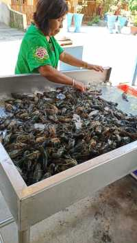 Virus Corona, Ekspor Udang Lobster Danau Toba Turun Drastis