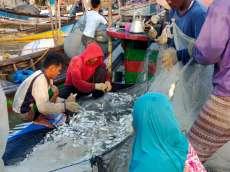 Nelayan Mengeluh Harga Ikan Gembung di Tanjung Leidong Turun