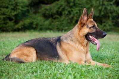Manusia Prasejarah Bunuh Anjing Mereka Agar Bisa Bersama di Akhirat