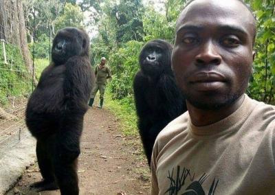 Bergaya Cool, 2 Gorila Ini Ikut Selfie