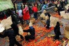 Asal-Usul Perang Tomat di Lembang: Dari Derita hingga Perayaan Seni