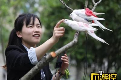 Raup Rp 61 Juta Per Bulan  dari Penjualan Popok untuk Burung