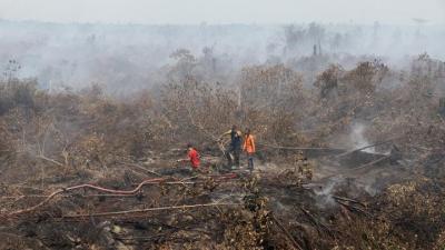 Tiga Tahun Terakhir, Ada 283 Kasus Kebakaran Hutan di Aceh